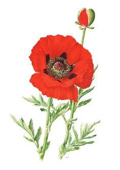 Fine giclee print Reproduction of 1972 French Vintage poppy poster Botanical art Red poppy print Poppy art Flower poster Oriental poppy art by FrenchVintagePrints on Etsy https://www.etsy.com/listing/273446790/fine-giclee-print-reproduction-of-1972
