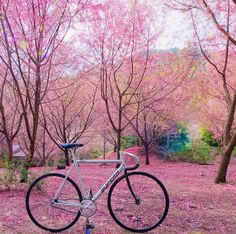 bikesandgirlsandmacsandstuff: (via Superb Summer Hours! Summer Hours, Fixed Gear, Big Love, Pretty Pictures, Metal Art, Old School, Adventure, Cycling, Pedal Pushers