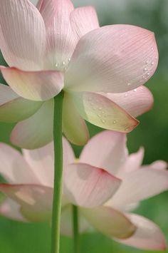 https://www.facebook.com/Namaste.Om.Om/photos/a.167856446564432.46551.167855136564563/2010804138936311/?type=3&theater