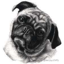 Pug by Susan Donley Pug Cartoon, Pug Pictures, Dog Photos, Pug Art, Cute Pugs, Realistic Drawings, Pug Love, Cat Drawing, Animal Drawings