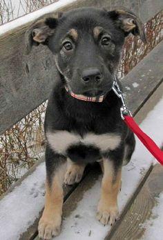 GRAPHICS /& MORE Pup-a-cinno Coffee Puppy Dog Humor Funny Square Tie Bar Clip Clasp Tack Silver Gold