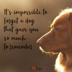Awesome Dog-Training Tips For The Average Joe - Funny Dog Quotes - It's impossible to forget a dog that gave you so much to remember. The post Awesome Dog-Training Tips For The Average Joe appeared first on Gag Dad. Dog Quotes Love, Dog Quotes Funny, Funny Dogs, Pet Loss Quotes, Quotes About Dogs, Losing A Dog Quotes, Dog Qoutes, Dog Sayings, Quotes On Dogs