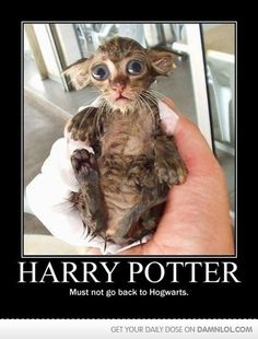 """If you want to laugh then just read out these """"Top Harry Potter Cat Memes"""".These """"Top Harry Potter Cat Memes"""" are so hilarious and able to make you laugh.Just read out these """"Top Harry Potter Cat Memes"""". Animal Memes, Funny Animals, Cute Animals, Baby Animals, Funniest Animals, Animal Humor, Animal Quotes, Dobby Cat, Animal Gato"""