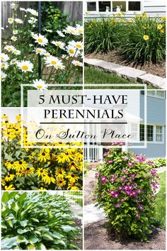 List of 5 Must-Have Perennials that are tried and true performers. Advice and tips for care and maintenance.