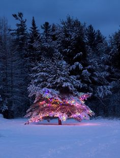 if a tree's decorated in the middle of the woods and no ones around...