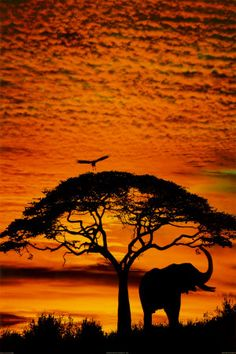 beautiful photos of Africa - Google Search