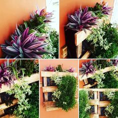#Garden, #Outdoor, #PalletDiyIdeas, #PalletPlanter, #RecyclingWoodPallets I wanted something to add a splash (or more) of color to my wall, but I didn't want to do just a hanging plant. I wanted something unique. So, we decided to make this fast, fun, and free Pallet Vertical Planter. It only took a few hours to