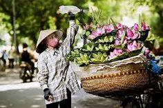 Flower in Hanoi.  See more at : http://holidaytoindochina.com/destinations/vietnam-destinations/hanoi-travel