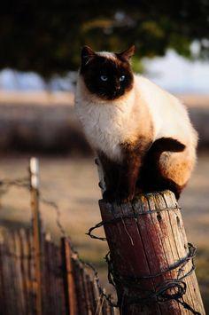 Sir Mixalot the Kitty