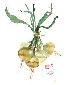 Oignon Allium Cepa Illustration botanique par lucileskitchen, $30.00