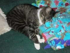 One of your sleepy kitties! Be sure to vote in the Pet Contest on our blog and Facebook by 4/25!