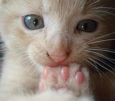 PetsLady's Pick: Cute Kitten Toes Of The Day ... see more at PetsLady.com ... The FUN site for Animal Lovers