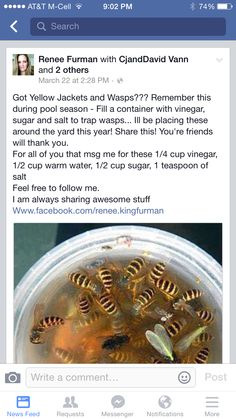 Yellow jacket and wasp killer Get Rid Of Wasps, Bees And Wasps, Simple Life Hacks, Useful Life Hacks, Home Design, Getting Rid Of Bees, Wasp Traps, Wasp Trap Diy, Bug Trap