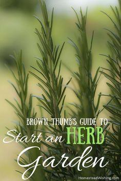 So you want to start an herb garden but you feel like you have a brown thumb? Herb garden tips, homestead gardening, herb-garden. | Homestead Wishing, Author Kristi Wheeler | http://homesteadwishing.com/start-an-herb-garden/ |