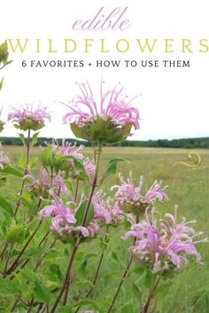 Grow an edible wildflower garden and learn to cook with them!
