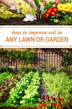 The common denominator for thriving plants and lawn is the soil. Learn how to improve your soil health. Garden Compost, Garden Soil, Garden Boxes, Lawn And Garden, Indoor Garden, Vegetable Garden, Garden Ideas, Organic Gardening, Gardening Tips