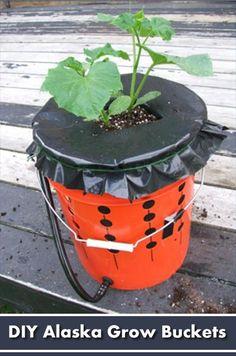 DIY Alaska Grow Bucket - the easiest self watering system ever! #gardening #homesteading