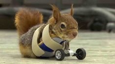 Volunteers Never Gave Up on Severely Injured Squirrel—Now She Has Hot New Wheels
