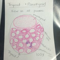 Thyroid& parathyroid gland histology