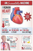 An Incredible Machine: The Human Heart