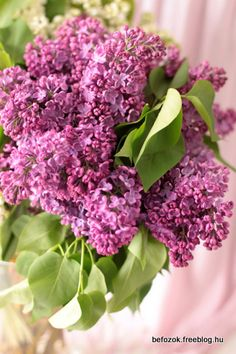 bouquet of lilac Lilac Flowers, Colorful Flowers, No Bake Cake, Cabbage, Bouquet, Vegetables, Spring, Sweet, Lilacs