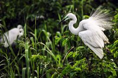 3 Nights & 4 Day Munnar, Kumarakom Tour Packages visit : http://www.vnhindia.com/packages?catgid=13&duration=3