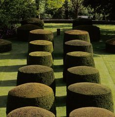 The yew topiary on the Lower Lawn at Wightwick Manor.