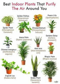 plants & plants - plants indoor - plants in bedroom - plants aesthetic - plants that repel mosquitos - plants that dont need sunlight - plants in bathroom - plants in living room Best Bathroom Plants, Best Plants For Bedroom, Plants For Kitchen, Best Plants For Home, Bathroom Flowers, Best Plants For Office, Bathrooms With Plants, Bathroom Ideas, Kitchen Herbs