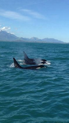 Please do NOT go to sea world!! They torture and kill and abuse the Orcas and Dolphins. Watch Black Fish!! it's out on DVD now.