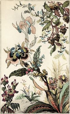 Trowbridge - Japanese Fantasy Flowers - These Colorful Art Deco Floral Images Are Fine Art Giclee Reproductions Of Original Designs Used To Produce Hand-Painted Wallpaper And Are From The Trowbridge Antique Archives. In Silver Leaf Mirror Frame Code: 965 Art Floral, Motif Floral, Floral Flowers, Paper Flowers, Art Deco Flowers, Drawing Flowers, L Wallpaper, Hand Painted Wallpaper, Japanese Flowers