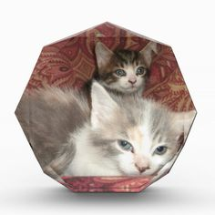 Comfy Kitties #Awards!  #Cute #kittens galore are in my #zazzle #store!  http://www.zazzle.com/conquestkitty*