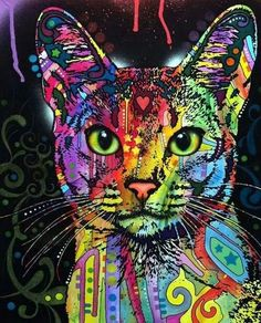 #gatto#colore#gato#color#cat#color#miao#frrrr