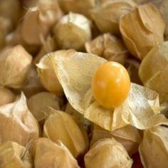 Physalis pruinosa 'Goldie' (Cerise de terre) Graines