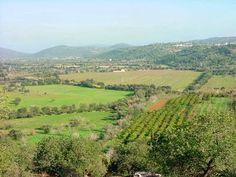 Ai mê rico Algarve!: Barrocal