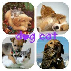 Hond en kat fotocollage
