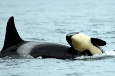Playing with mom! #mothersday #orcas