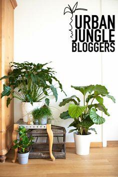 Urban Jungle via Herbst-Kind