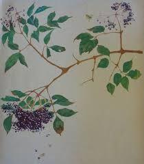 Image result for andrea kelland print