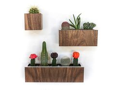 Set of 3 Planters Wall Hanging OR Tabletop by thewoodybeckers
