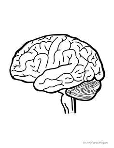 Human organs printable Human Body Science, Human Body Unit, Science Activities For Kids, Science Art, Human Brain Diagram, Human Body Organs, Learning To Embroider, Drawing School, Pencil Art Drawings