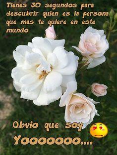 Frase de amor con rosas blancas
