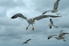 Karien: Meeuwen vliegen mee met de boot van Texel naar Den Helder en vangen stukjes brood op die de mensen in de lucht gooien.