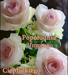 Humor, Rose, Flowers, Plants, Blog, Polish, Pictures, Humour, Pink