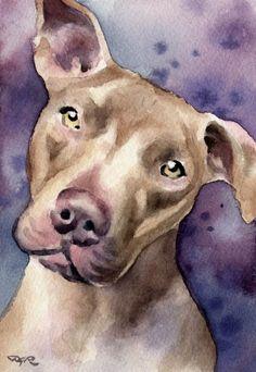 PIT BULL TERRIER Dog Art Print Signed by Artist D by k9artgallery