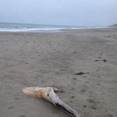 Sunset beach walk. #pajarodunes #watsonville #montereylocals #watsonvillelocals- posted by Rose Eustachio https://www.instagram.com/reustachio. See more of Watsonville, CA at http://watsonvillelocals.com