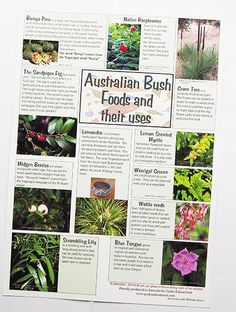 Aboriginal Bush Foods and their uses Poster – Koori Curriculum Aboriginal Food, Aboriginal Children, Aboriginal Education, Indigenous Education, Aboriginal History, Aboriginal Culture, Australian Wildflowers, Australian Native Flowers, Australian Bush