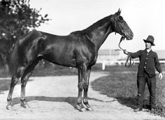 Man o' War, is considered one of the greatest Thoroughbred racehorses of all time. During his career he won 20 of 21 races and over two hundred thousand dollars in purses. He was by Fair Play from, Mahubah, by U. Pretty Horses, Beautiful Horses, Thoroughbred Horse, Clydesdale Horses, Breyer Horses, Man Of War, Sport Of Kings, Racehorse, Horse Pictures