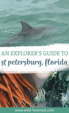 Looking for the best things to do in St Petersburg FL? From beautiful beaches to a hip downtown, there is an amazing and wide range of things to do! st petersburg florida beach, st petersburg florida things to do in Florida Vacation, Florida Travel, Florida Beaches, Travel Usa, Usa Roadtrip, Travel Tips, St Petes Beach Florida, St Petersburg Florida, St Pete Beach