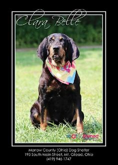 THE DAVINCI FOUNDATION FOR ANIMALS RESCUE ACROSS THE NATION Rescue Info: Clara Belle, Mount Gilead, OH Morrow County Dog Shelter