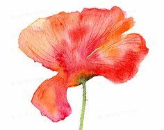 Acquerello del papavero  pittura fiore rosso  4x6 parete